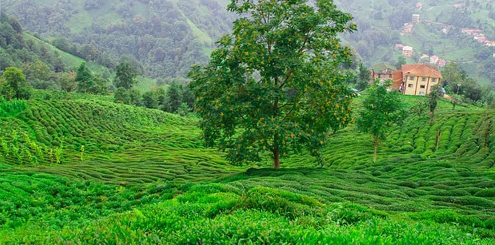 Assam Meghalaya Tour Package from Hyderabad