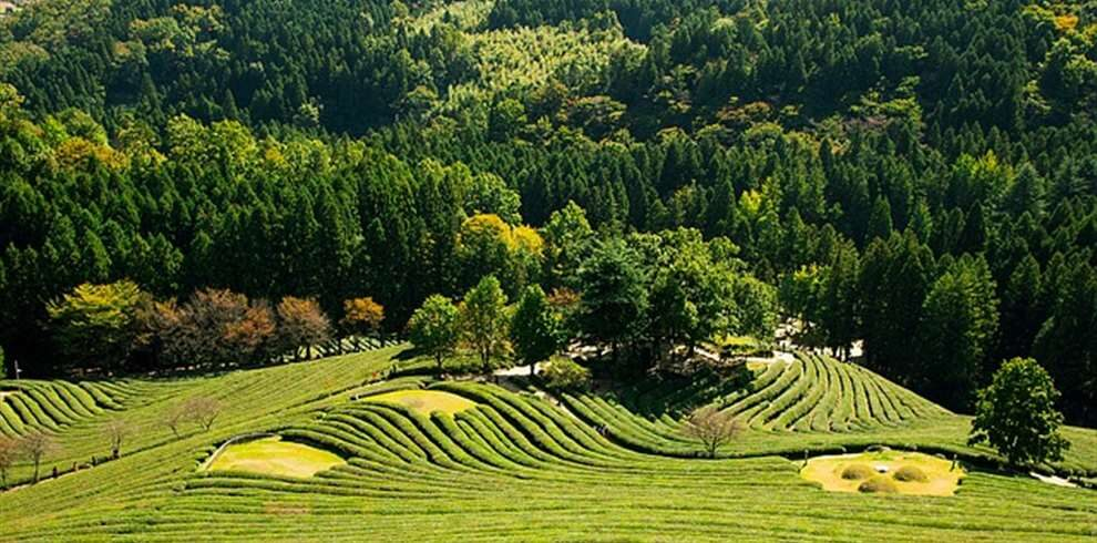 Assam Meghalaya Tour Package from Pune